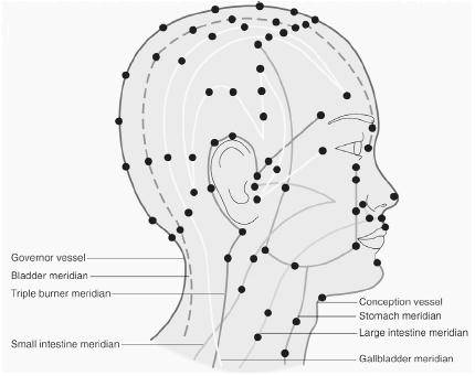 Acupuncture sites and meridians on the face and neck. (Electronic Illustrators Group. Reproduced by permission of Gale Group.)