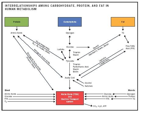 metabolism food nutrition body diet carbohydrate