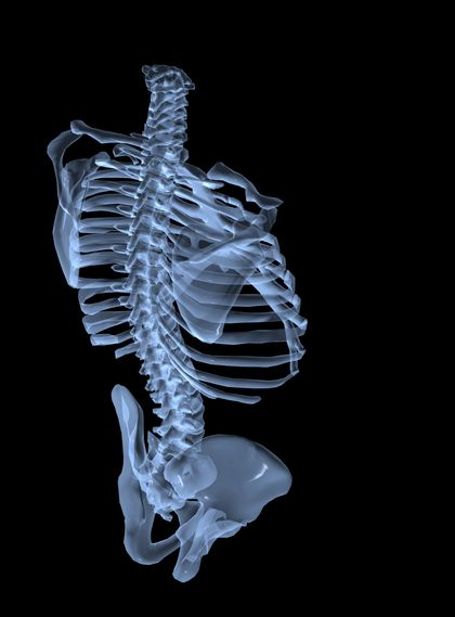 Workings: how the skeletal system functions - The Skeletal System ...